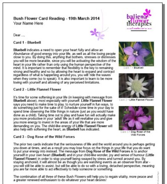 Experience a Bush Flower Reading with Clare Chapman - Australian Bush Flower Essences Teacher Trainer & Coordinator