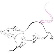 Chinese Zodiac Sign: Rat