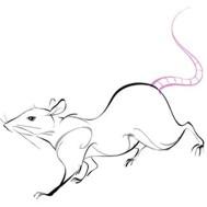 Chinese Zodiac Sign: Rat