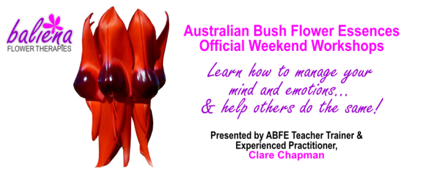 Official Australian Bush Flower Essences Workshops with Clare Chapman