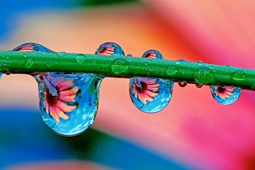 Flowers in droplets